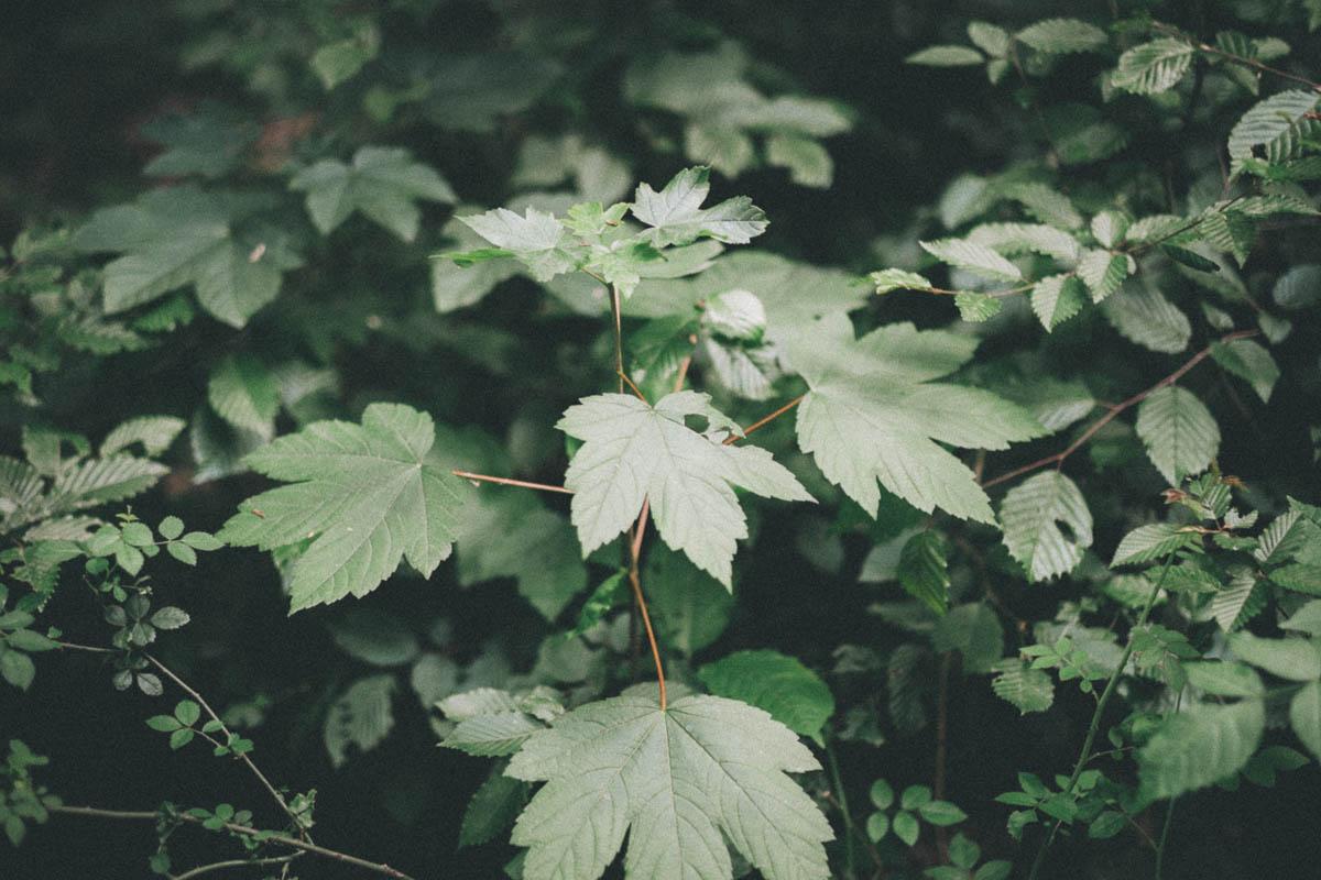 Ober Olmer Wald