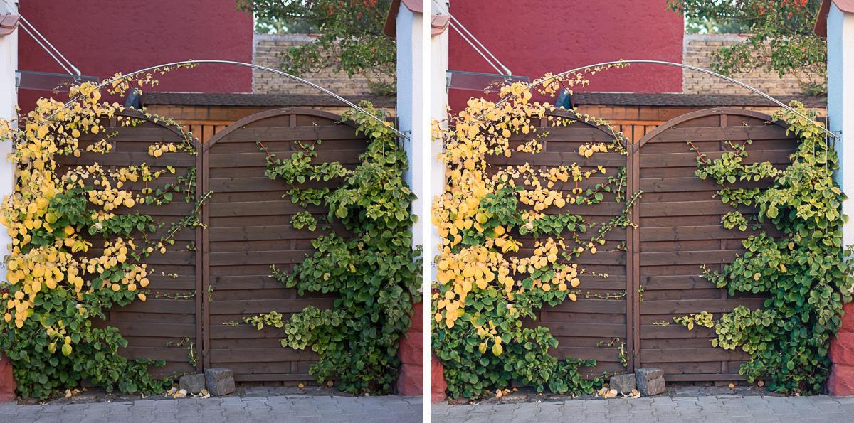 Lightroom Preset Herbstlaub