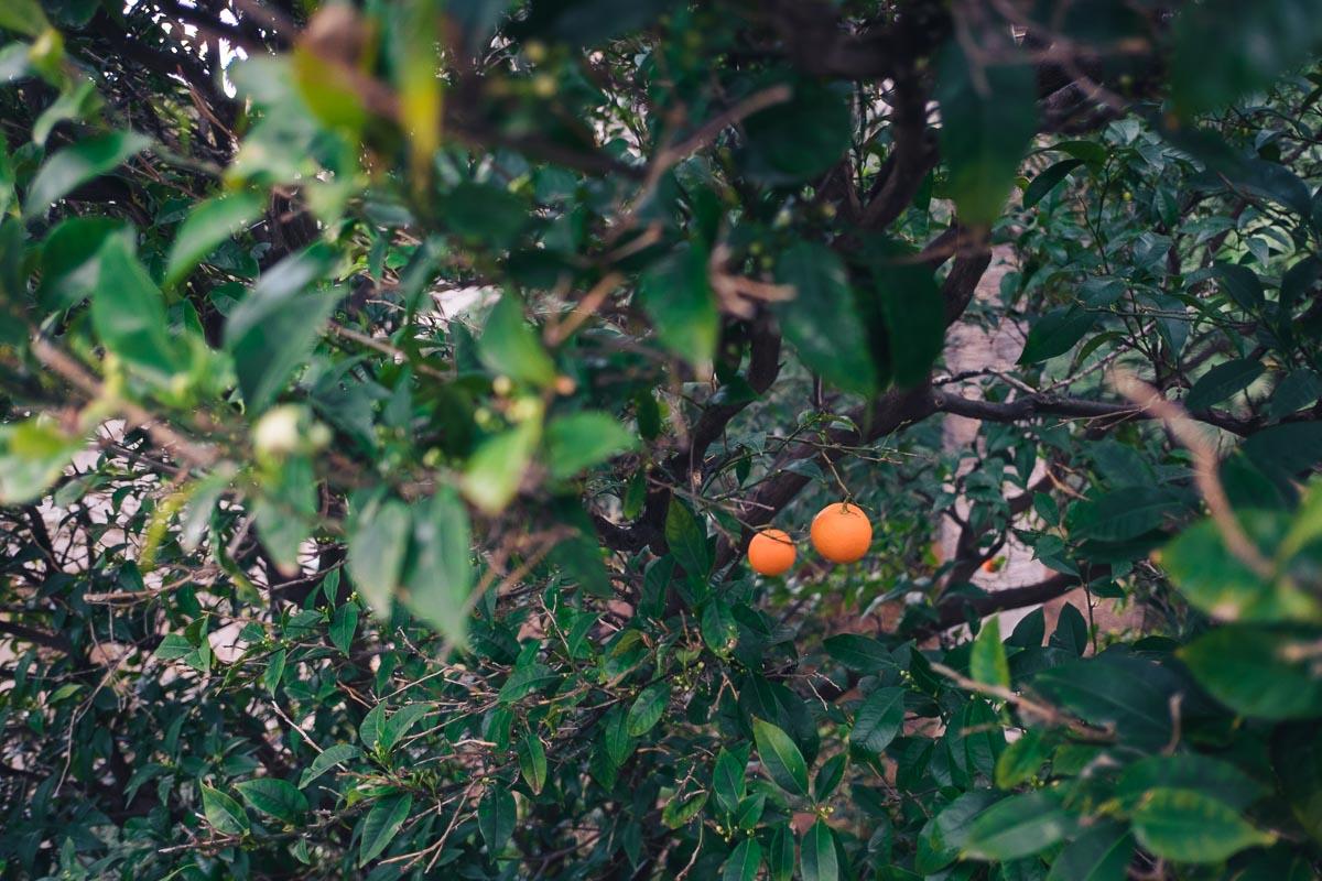 Orangenbaum in Dubrovnik