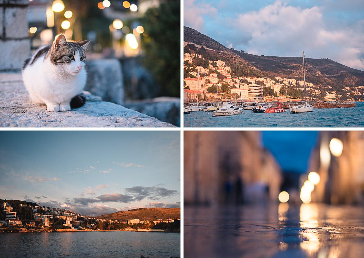 Dubrovnik - Katzen und Hafen