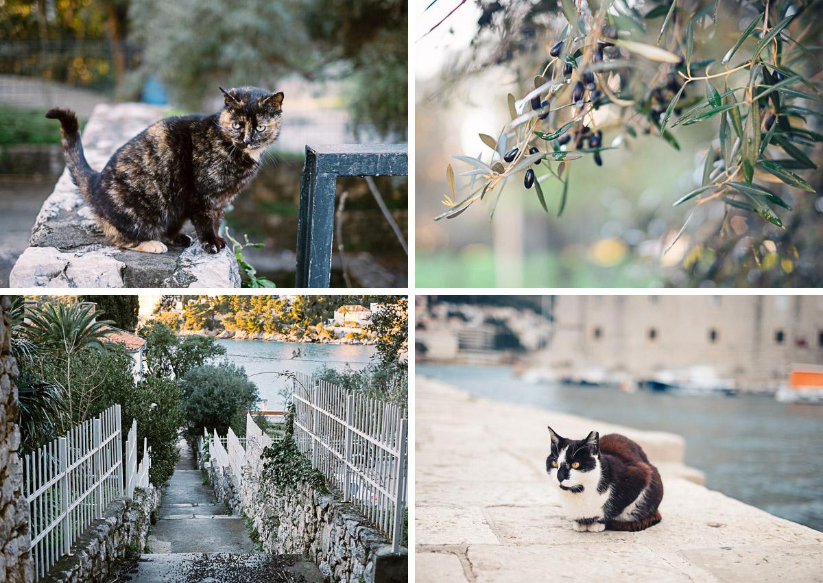 Dubrovnik - Katzen und Natur