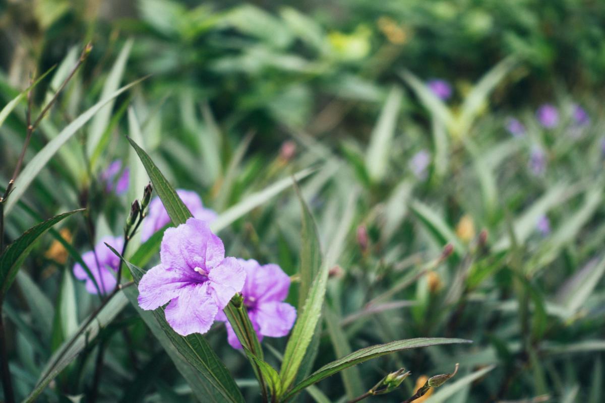 Vietnam Hanoi Blume