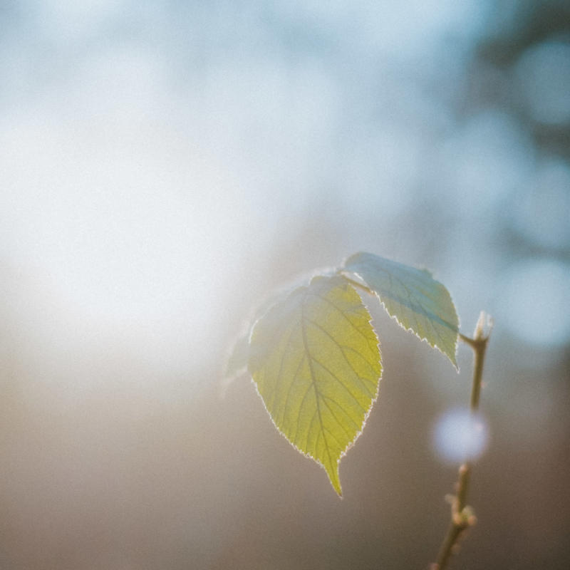 Februar Gegenlicht Sonne Wald