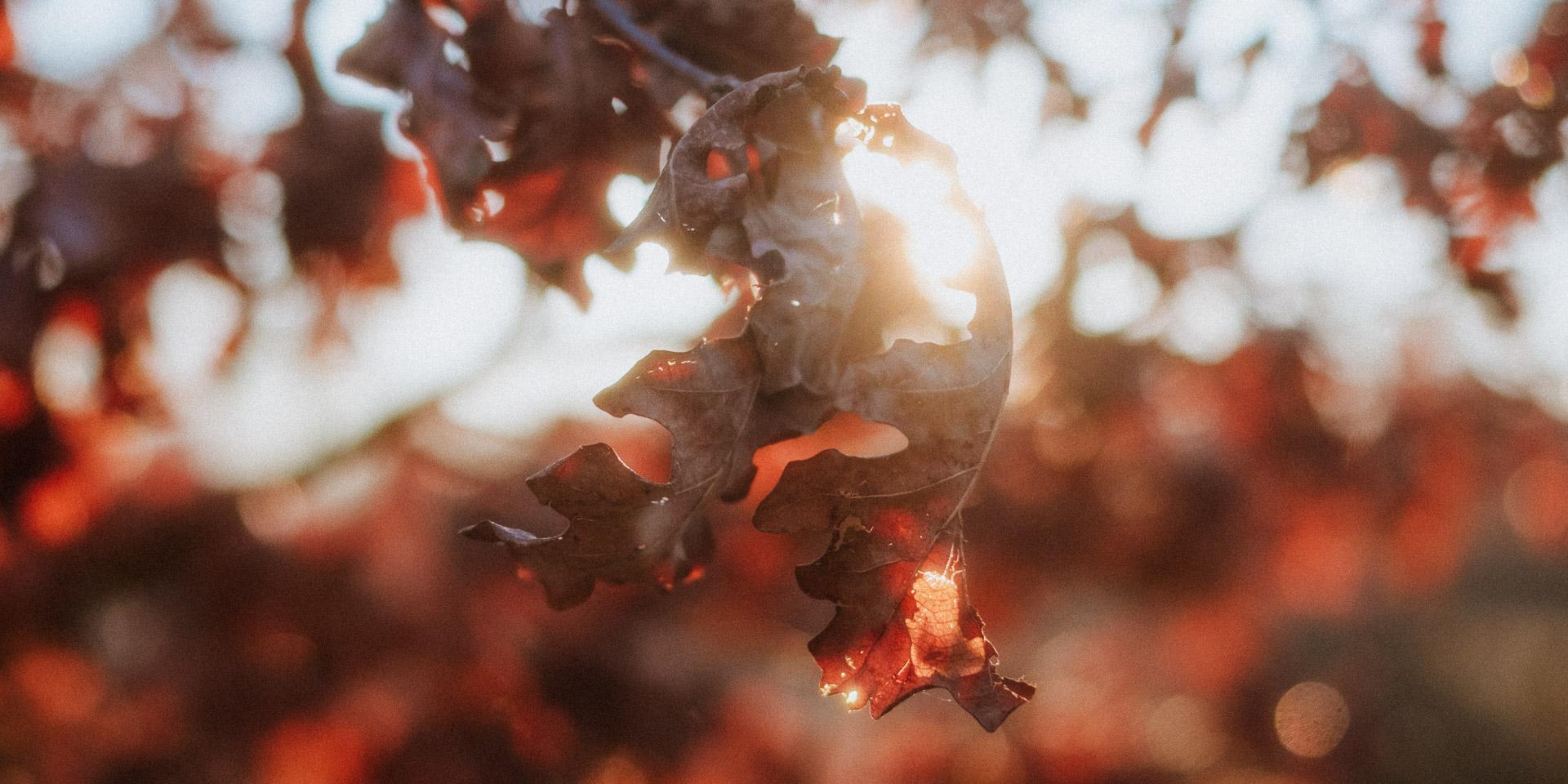 Februar Gegenlicht Herbstblätter