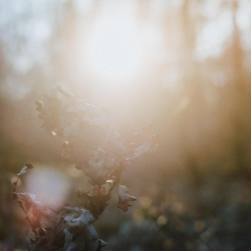 Februar Gegenlicht vertrocknete Blätter