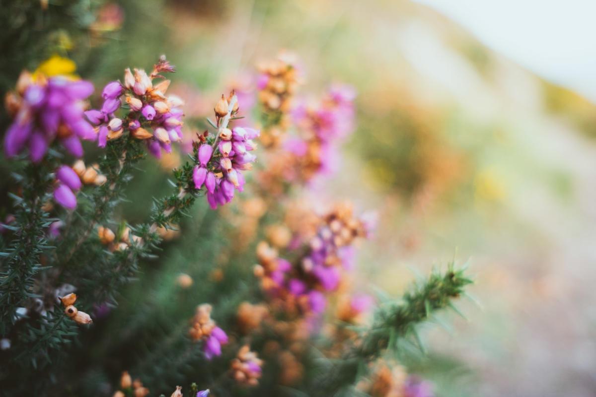 Blumen auf dem Howth Cliff Walk