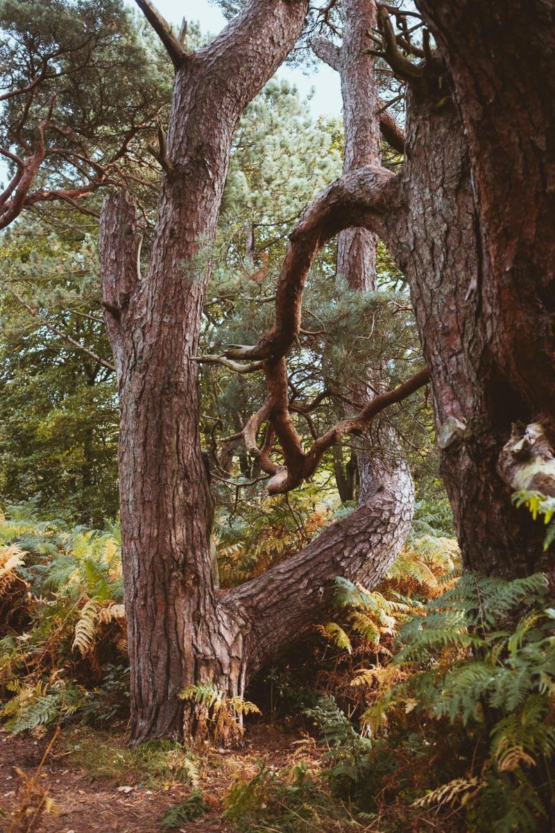 sehr alter Baumstamm