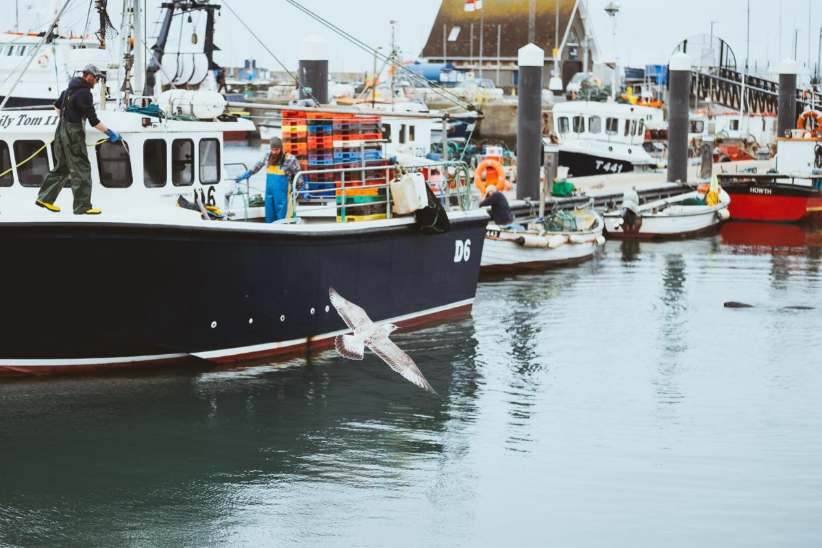 Fischerboot und Seehund im Hafen von Howth