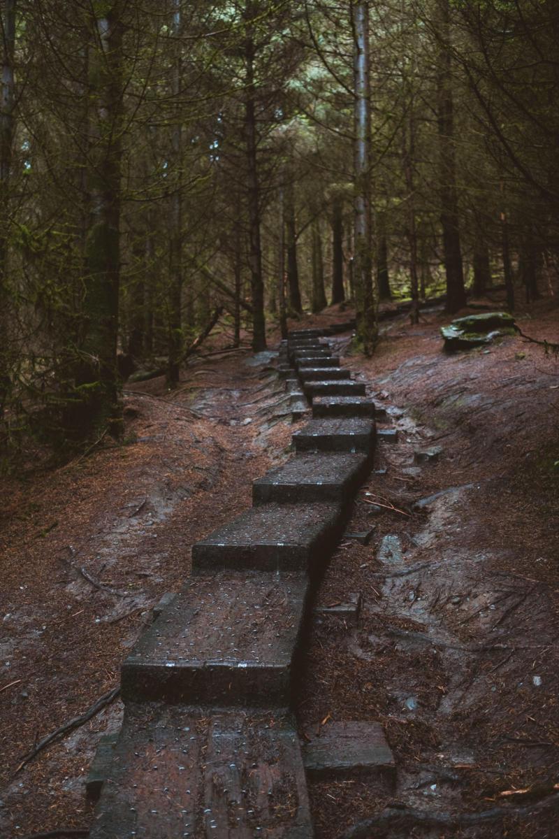Balkenweg im Wald