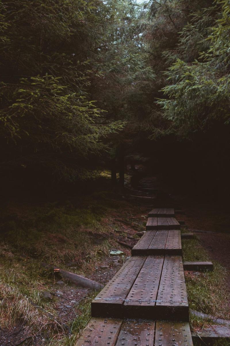 dunkler Balkenweg im Wald