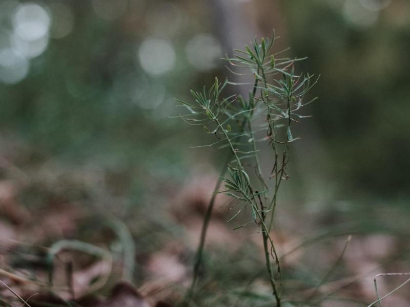 Fotografie Makro Natur Mainz Gonsenheimer Wald